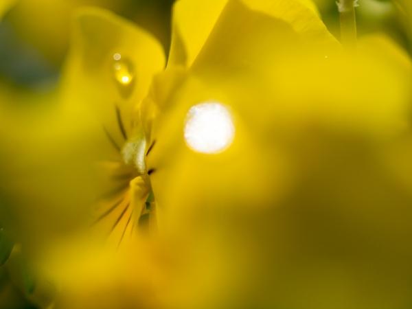 花菜ガーデン D
