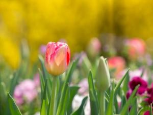 花菜ガーデン K