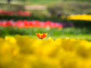 昭和記念公園 C