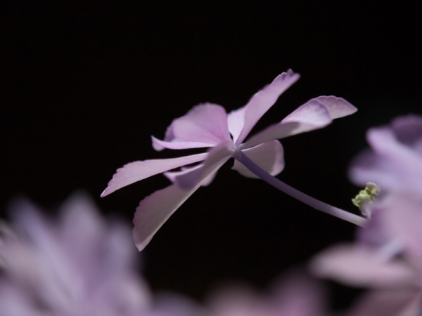 庭の花 A