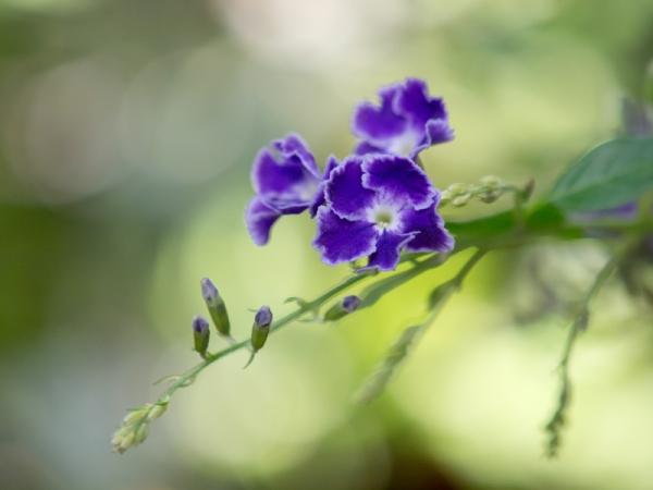 庭の花 D