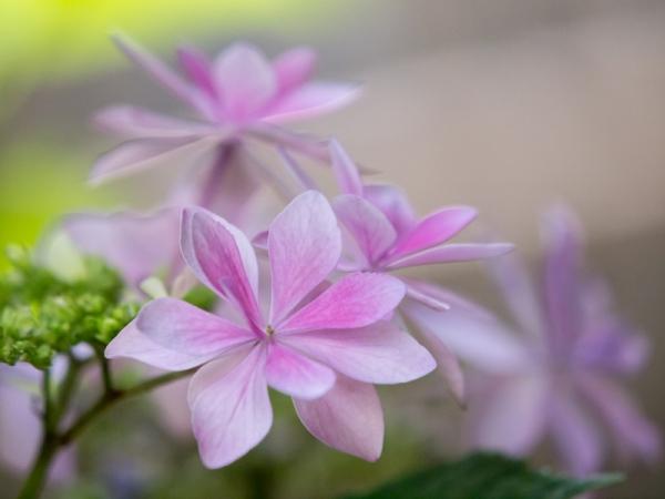 庭の花 B