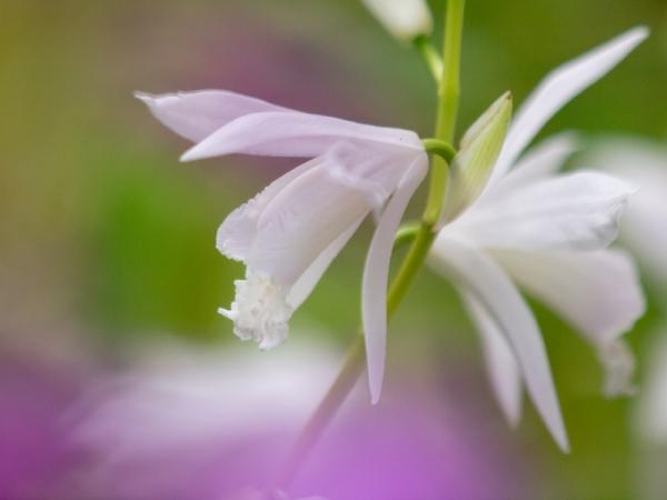 庭の花 C