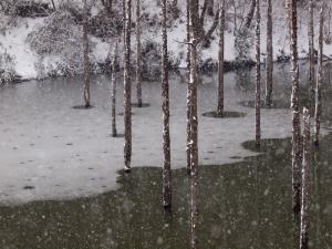 雪景色 D