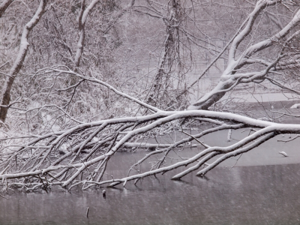 雪景色 F