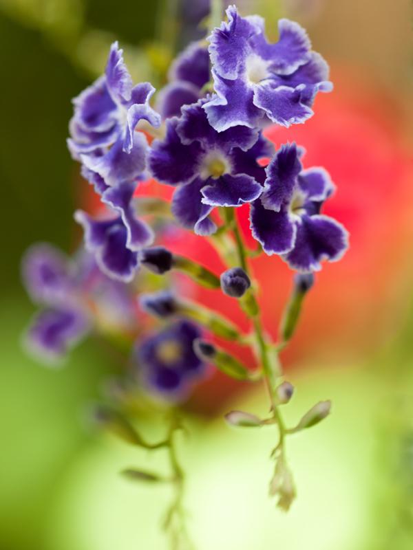 庭の花 E