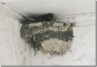 14042201 ツバメの巣