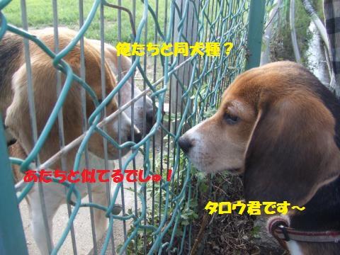 001_convert_20140722031244.jpg