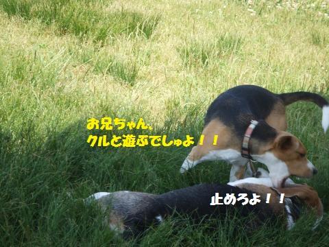 015_convert_20140602032004.jpg