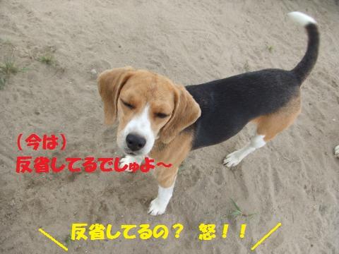 024_convert_20140722032649.jpg