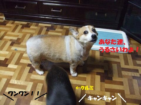 028_convert_20140726014811.jpg