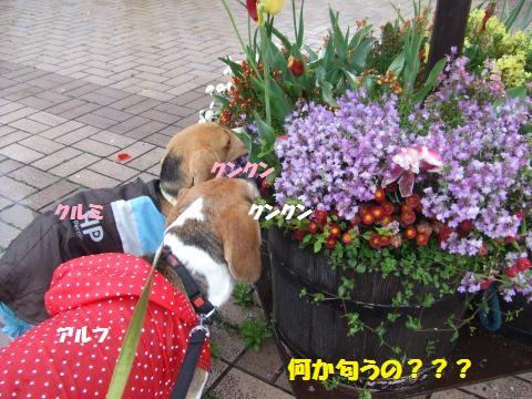 029_convert_20140430053616.jpg