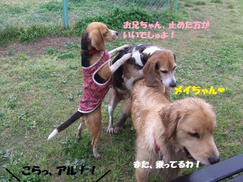 031_convert_20140428020458.jpg
