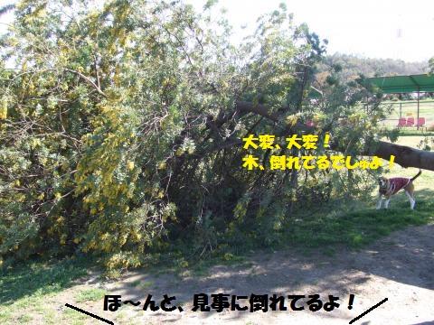 036_convert_20140406232431.jpg
