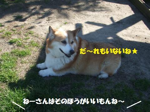 039_convert_20140406233458.jpg