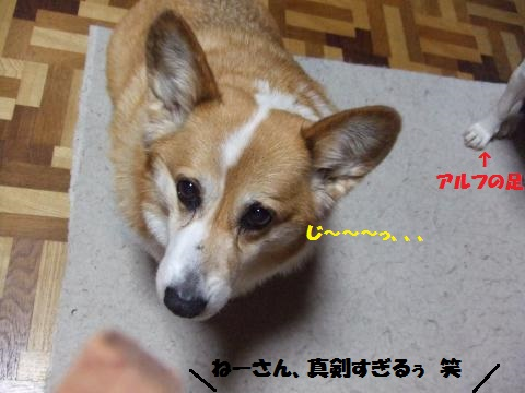 039_convert_20140516010642.jpg