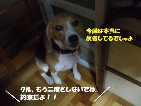 051_convert_20140802034120.jpg