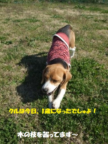 054_convert_20140414024856.jpg