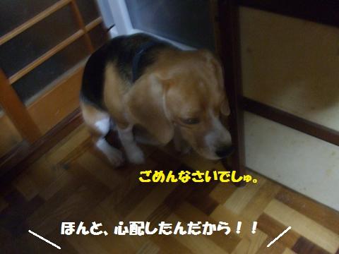 056_convert_20140802034304.jpg