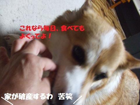 063_convert_20140618031224.jpg