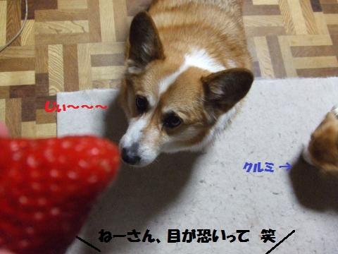 065_convert_20140423013336.jpg