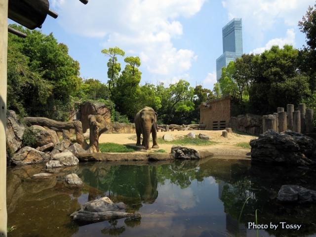 天王寺動物園 ゾウとハルカス