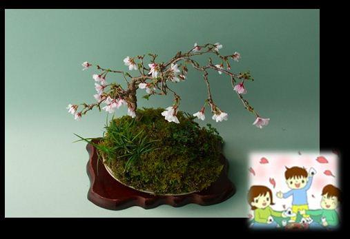 H26年富士桜