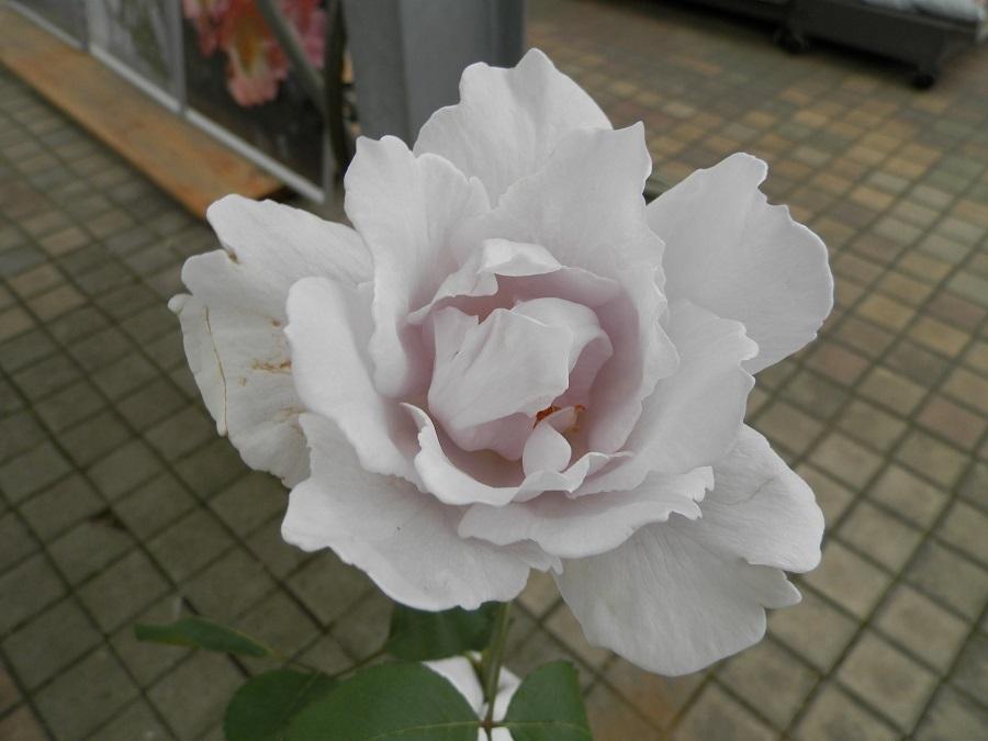 P6014715.jpg