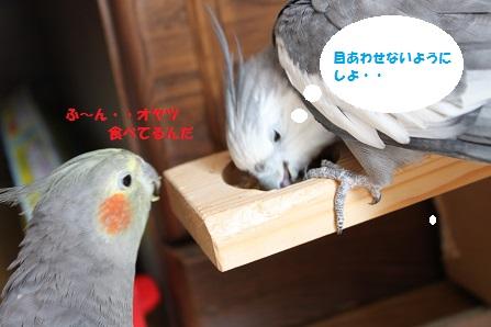 オヤツ狙いのマロンが~