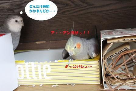 あーっ!!マロンってぇー!!