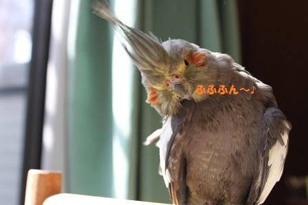 羽繕いに夢中です