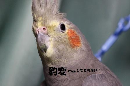 なんか かわいい~!!(笑