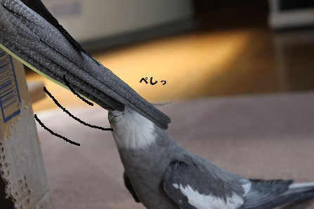 羽がっ・・!