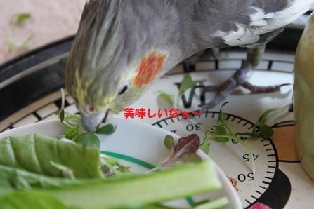 かたや、この人(鳥)は・・
