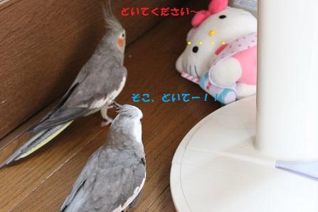 二人(鳥)でお願いちゅう~