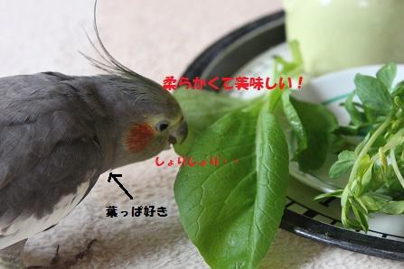 葉っぱ好きなマロン