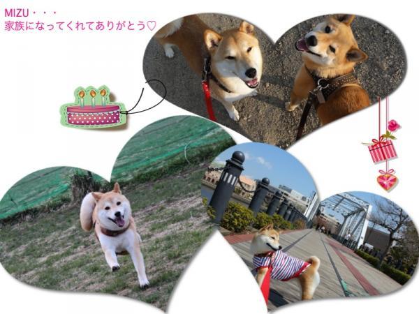 5-1HAMI01_convert_20140505142106.jpg