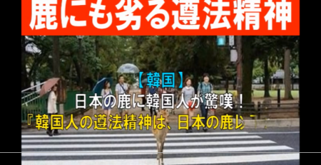 【韓国の反応】韓国人の遵法精神は、日本の鹿以下だ! [嫌韓ちゃんねる ~日本の未来のために~