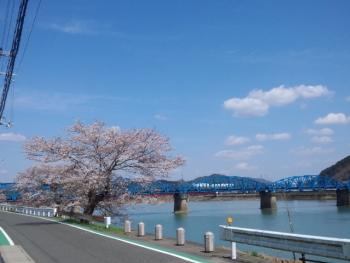 20140402桜~♪