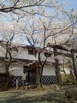 20140408城址公園の桜~♪2