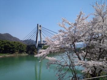 20140409またまた 桜~♪