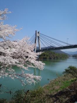 20140409またまた 桜~♪2