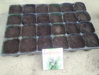 20140504花の種まきローズマリー