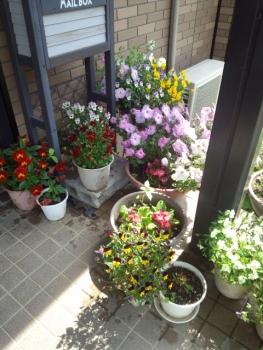 20140506玄関の花2