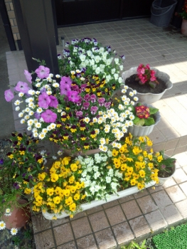 20140506玄関の花