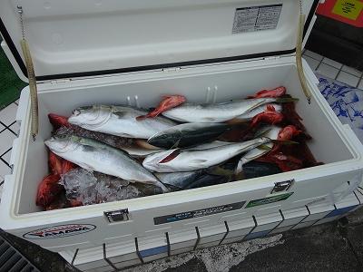 たくさんのお魚