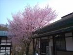 道の駅六合の桜