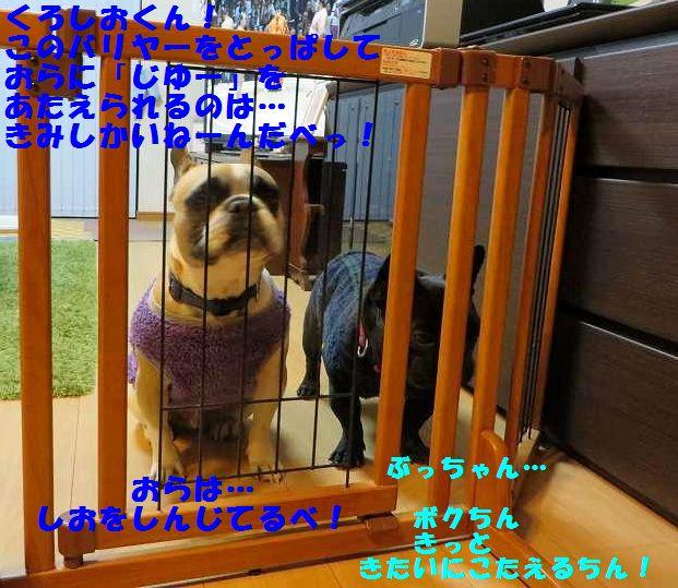 060_20140227142530d1b.jpg