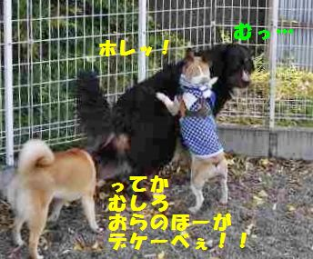 093_20140512141740c8d.jpg
