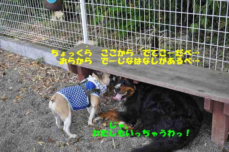 100_2014051215032370f.jpg